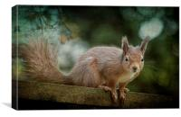 Red Squirrel 2, Canvas Print