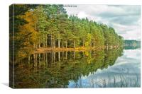 Loch Garten Reflections, Canvas Print