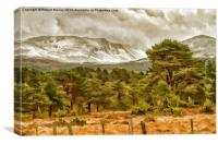 Winter comes to the Cairngorms, Canvas Print
