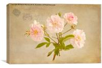 Musk Rose from Paris, Canvas Print