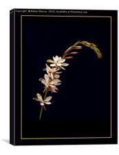 """Gaura """"The Bride"""", Canvas Print"""