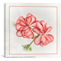 Mexican Ruby, Canvas Print