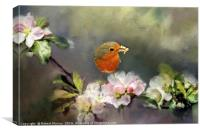 Robin Gathering Food, Canvas Print