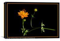Golden Queen, Canvas Print