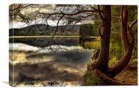 Loch Garten, Canvas Print