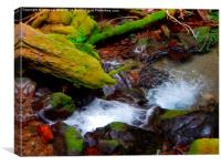 Small wilderness creek , Canvas Print