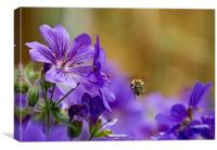 Flight of the Bumble Bee, Canvas Print