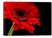 Big Red Flower, Canvas Print