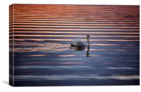 Swan abstract, Canvas Print