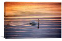 Golden ripples, Canvas Print