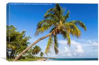 Palm tree overhanging the beach, Canvas Print