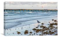 Sea gull scavenges for food, Canvas Print