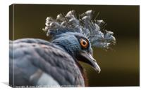 Victoria crowned pigeon, Canvas Print