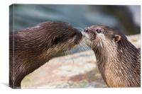 Asian small-clawed otter pair, Canvas Print