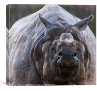 Greater one-horned rhinoceros, Canvas Print