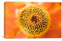 Orange Flower or Alien?, Canvas Print