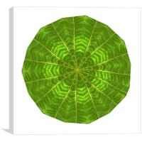 Circular composite of fern leaf, Canvas Print