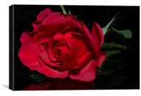 Red Red Rose, Canvas Print