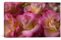 Pink Petals, Canvas Print
