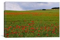Poppies in the Oilseed Rape, Canvas Print