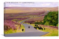 Black Sheep on Spaunton Moor, North York Moors, Canvas Print