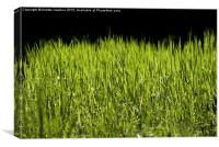 bright grass leaves grow on black background, Canvas Print