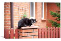 One lonely stray black cat sitting on fence , Canvas Print