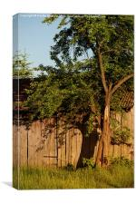 old wooden shack tree shadow, Canvas Print
