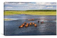 bucolic view in Biebrza wetland, Canvas Print