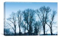 Blue trees sadness, Canvas Print