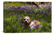 Bluebell Puppy dog, Canvas Print