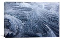Frost Ice frozen, Canvas Print