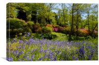 Bluebell and Azalea Woodland Scene, Canvas Print