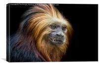 Red Titi Monkey, Canvas Print