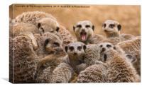 Meerkats  , Canvas Print