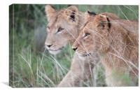 Young Lions, Canvas Print