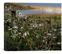 Camomile Daisies , Canvas Print
