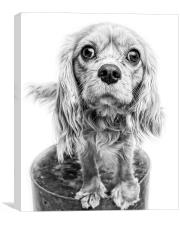 Cavalier King Charles Spaniel Puppy Dog Portrait |, Canvas Print