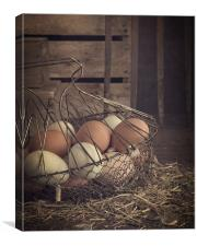 Eggs in vintage wire egg basket, Canvas Print