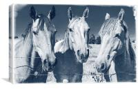 Horsing Around, Canvas Print