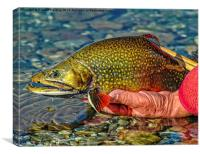 Trout, Canvas Print