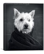West Highlands White Terrier, Canvas Print