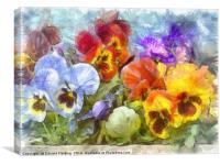 Flower Box Full of Pansy Pencil, Canvas Print