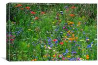 Wild flowers at Wetland Centre, Middlesex, Canvas Print