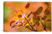 Backlit leaves with texture, Canvas Print
