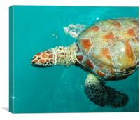 Beautiful Turtle, Canvas Print