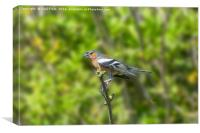 Chaffinch Perched on a Branch, Canvas Print