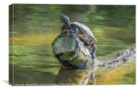 Terrapin Sitting on a Log, Canvas Print