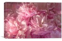 Pink Blossom Background, Canvas Print