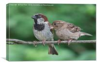 Two House Sparrows, Canvas Print